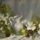 hedgeroses