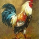 rooster52833445